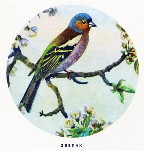 Стихи про птиц для детей рисунки птиц
